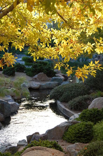 Monthly tea ceremony starting at Japanese Garden in Phoenix