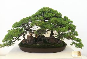 Nisei Week JACCC Exhibition Bonsai