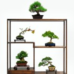Nisei Week Bonsai Nanpu Kai