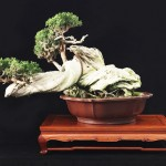 Kofu Bonsai Kai
