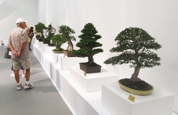 Bonsai by Nampu Kai