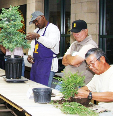 Bonsai making demonstrations at the Huntington Library. (Courtesy of the Golden State Bonsai Federation)