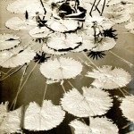 "Asahachi Kono ""Pond Fantasy"" c. 1930. Gelatin silver print. Collection of the Kono family."