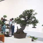 Nisei Week Bonsai
