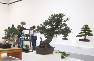 Nisei Week Bonsai
