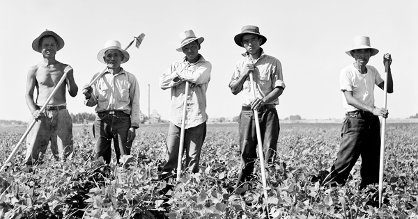 The Japanese American farm labor camp outside of Nyssa, Oregon, was the first of its kind in the United States. Laborers in sugar beet field outside of Shelley, Idaho. Library of Congress, Pint & Photographs Division, FSA-OWI Collection.
