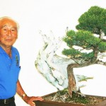 NanpuKai Bonsai 800 years old California Juniper by Harry Hirao