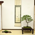 Clark Center Bonsai Competition Kazari