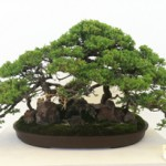 Nisei Week JACCC Exhibition Bonsai