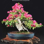 Bowers Bonsai